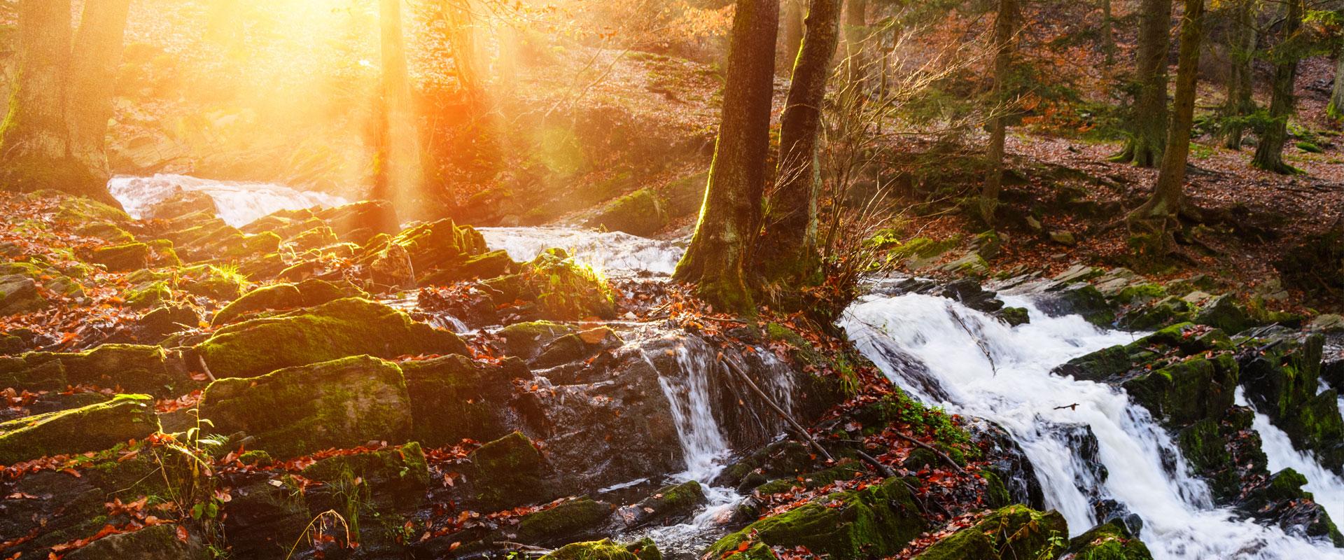 Imagebild kleiner Wasserfall im Wald